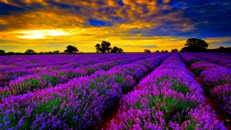 Best-Time-To-Visit-Lavender-Fields-In-France1